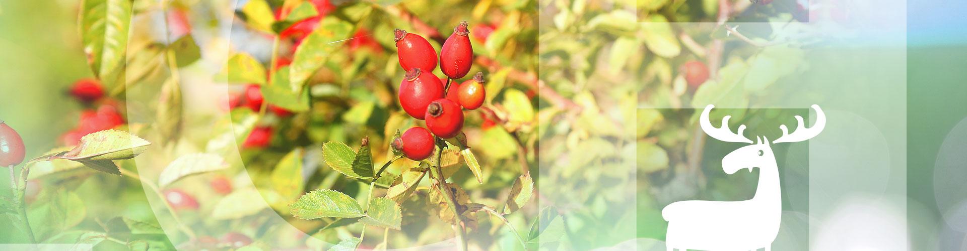 slider21_herbst2.jpg